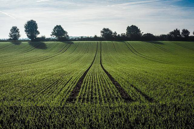 Top Career Paths: Agricultural and Natural Resource Economics